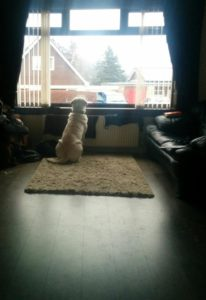 While we were watching the eclipse (well, staring at all the clouds where the eclipse should be) he stared out the wrong window.